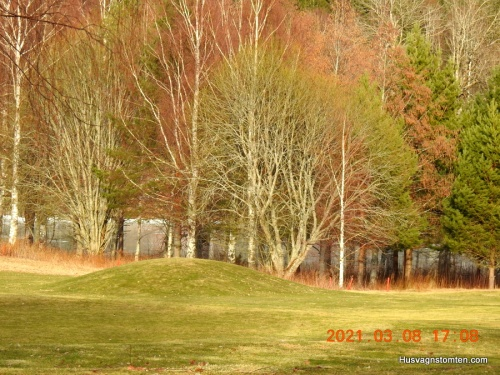 Lövträden börjar bli gröna